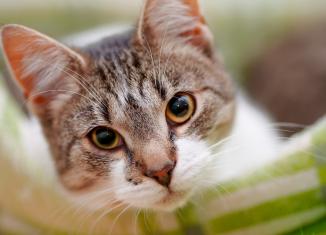 Gatos idosos sofrem com excesso de ruídos