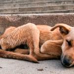 Isenção fiscal na pauta de CPI dos maus-tratos a animais