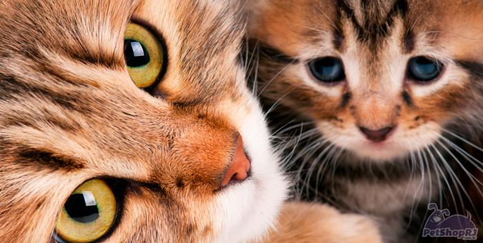 Os riscos das mordidas de gatos