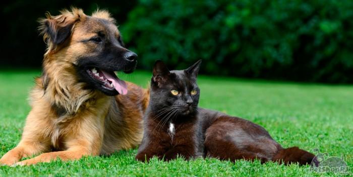 Pesquisa com animais, um debate inadiável