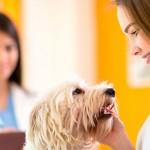 Prevenção, o melhor remédio para evitar doenças em pets