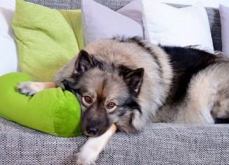 Referência em cirurgia cardíaca em pets