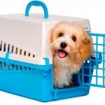 Transporte de cães e gatos sem segurança