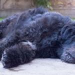 Ações para o combate à Leishmaniose em cães e gatos