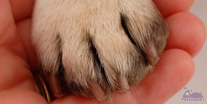 Artrite em pets, doença que requer muita prevenção