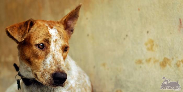 Barreiras à proteção animal