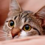 Conheça o lado secreto da vida dos gatos