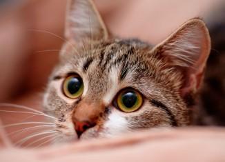 Conheca-o-lado-secreto-da-vida-dos-gatos