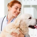 Desafios das ciências veterinárias em foco