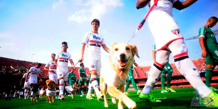 Gol de placa em nome de cães e gatos