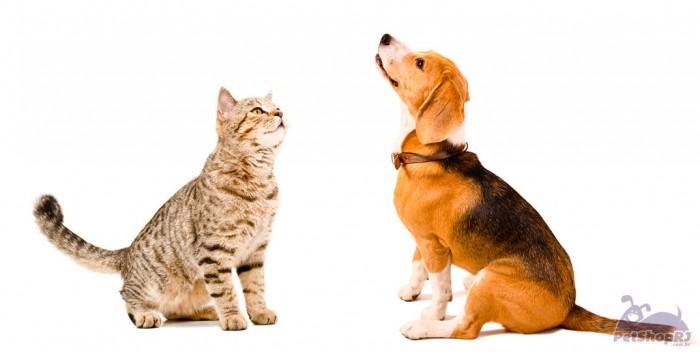 Pet Trade Show, nova feira em 2016