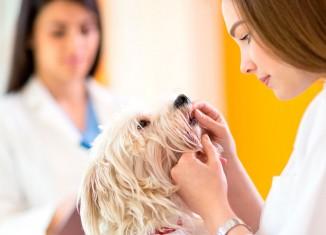 Prêmio para pesquisa inédita sobre doença em cães