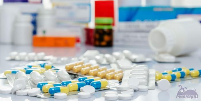 Projeto cria farmácias veterinárias populares no país