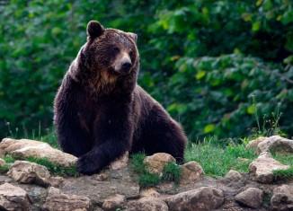 Em defesa dos animais silvestres