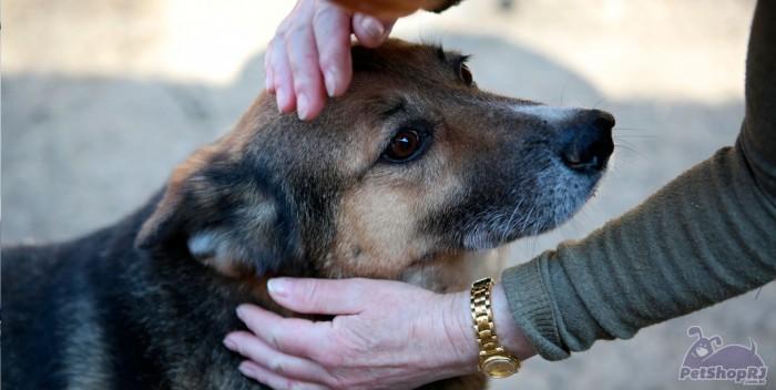 Campanhas de adoção de pets ganham as ruas