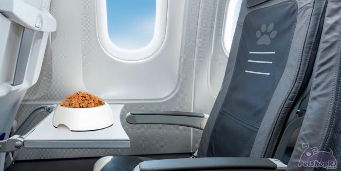 Regras para viagens aéreas de animais de estimação
