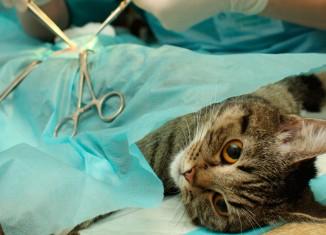 Castração de pets como medida preventiva