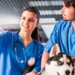 Veterinários em sintonia com a Saúde Única