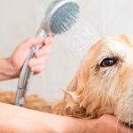 Recomendações sobre bem-estar animal