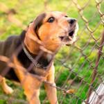 Benefícios para entidades protetoras dos animais