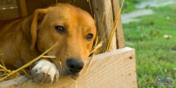 Maus-tratos aos animais em questão
